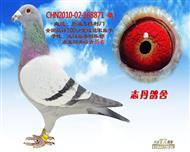 CHN2010-02-168871 雄