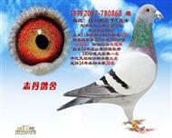 TFPF2007-780860 雄