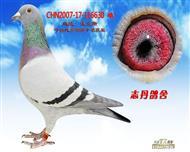 CHN2007-17-116630 雌