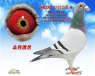 CHN2007-02-071578 雄