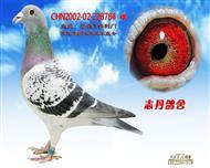 CHN2002-02-228784 雌