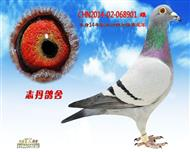 CHN2014-02-068901 雌
