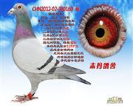 CHN2012-02-300160 雄