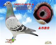 CHN2011-01-846786 雌
