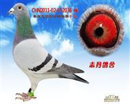 CHN2011-02-452036 雌