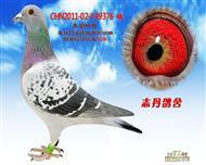 CHN2011-02-439376 雌