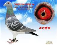 CHN2011-06-318068 雌