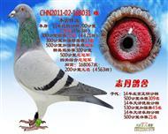CHN2011-02-168031 雌