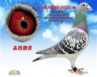 TAIWAN2008-650103 雄