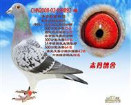 CHN2008-02-059892 雌