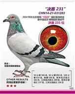 北京惠翔获奖鸽