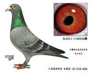 �S金�N��234
