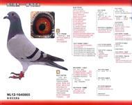 杨・欧瓦克-865