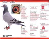 杨・欧瓦克---842