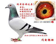 永胜公棚加强赛222名【已售邹平】