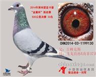 2014涿州卡普500公里决赛33名