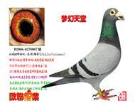 传奇铭鸽-梦幻天堂