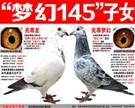"""苍白骑士王牌""""梦幻145""""梦幻组合(一)"""