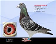 山鹰5981