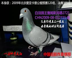 12年北京爱亚卡普预赛120名!决赛399名