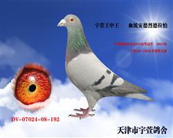 宇萱王中王