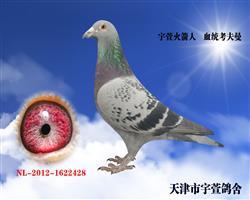 宇萱火箭人  已售青岛