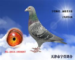 宇萱帅哥   本鸽以赠送河南广阳