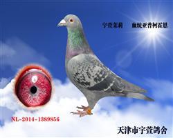 宇萱茉莉 已售贵州 本身两次前十