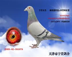 宇萱女皇 友情出售济宁好友
