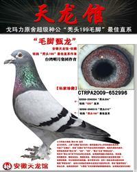 台湾明月集团作育
