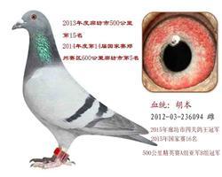 胡本236094