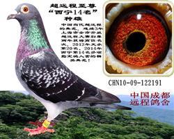 西宁14名种雄(中国超远程)