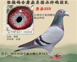 台湾明月集团作出.本身五关归巢