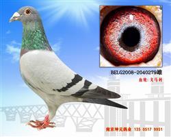 BELG2008-2040279
