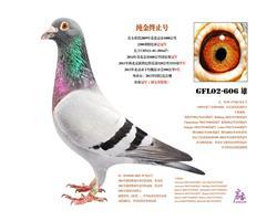 北京齐雪柱鸽舍