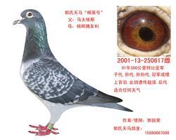 """郭氏天马617""""帼英号"""""""
