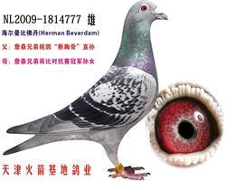 海尔曼-3