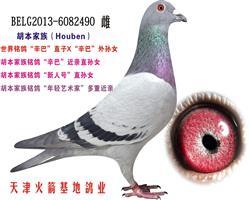 胡本家族-24