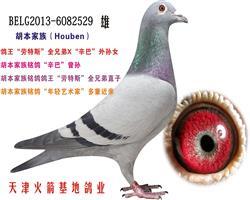 胡本家族-28