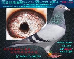 """""""苏维八关王""""直女"""