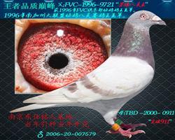 """""""苏维八关王""""配""""突破911""""直子"""