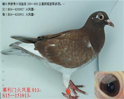 幕利门火凤凰913