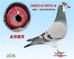 CHN2013-02-399719 雌