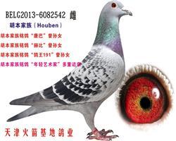 胡本家族-31