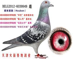 胡本家族-35