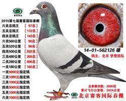 2015年第七届赛客国际春棚六关总鸽王