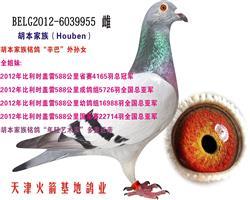 胡本家族-37