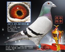 庆祝上海市鸽协50周年精英赛 冠军