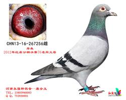 CHN2013-16-267256