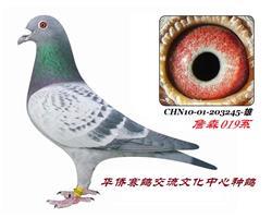 CHN10-01-203245-浅点-雄